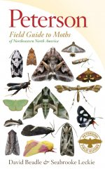 Peterson moth guide