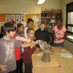5th grade students learn about a barred owl.