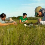 Researchers from Georgia Tech,  team up with NJ Fish and Wildlife's Tara Hewitt and I as we collect biosamples and data from gull chicks in the Cape May Coastal Wetlands WMA.