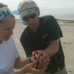 Former CWF employee and current SUNY plover researcher Emily Heiser hands off a Piping Plover captured for banding at Stone Harbor Point, NJ, summer 2012.