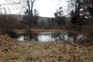 This small vernal pool in Hopewell is ready for things to start hoppin'.