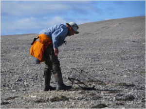 Mark sets the trap to catch the nesting adult knot. The trap falls when the bird sits on a small line across the nest.