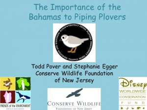 Piping Plovers Bahamas_General Presentation