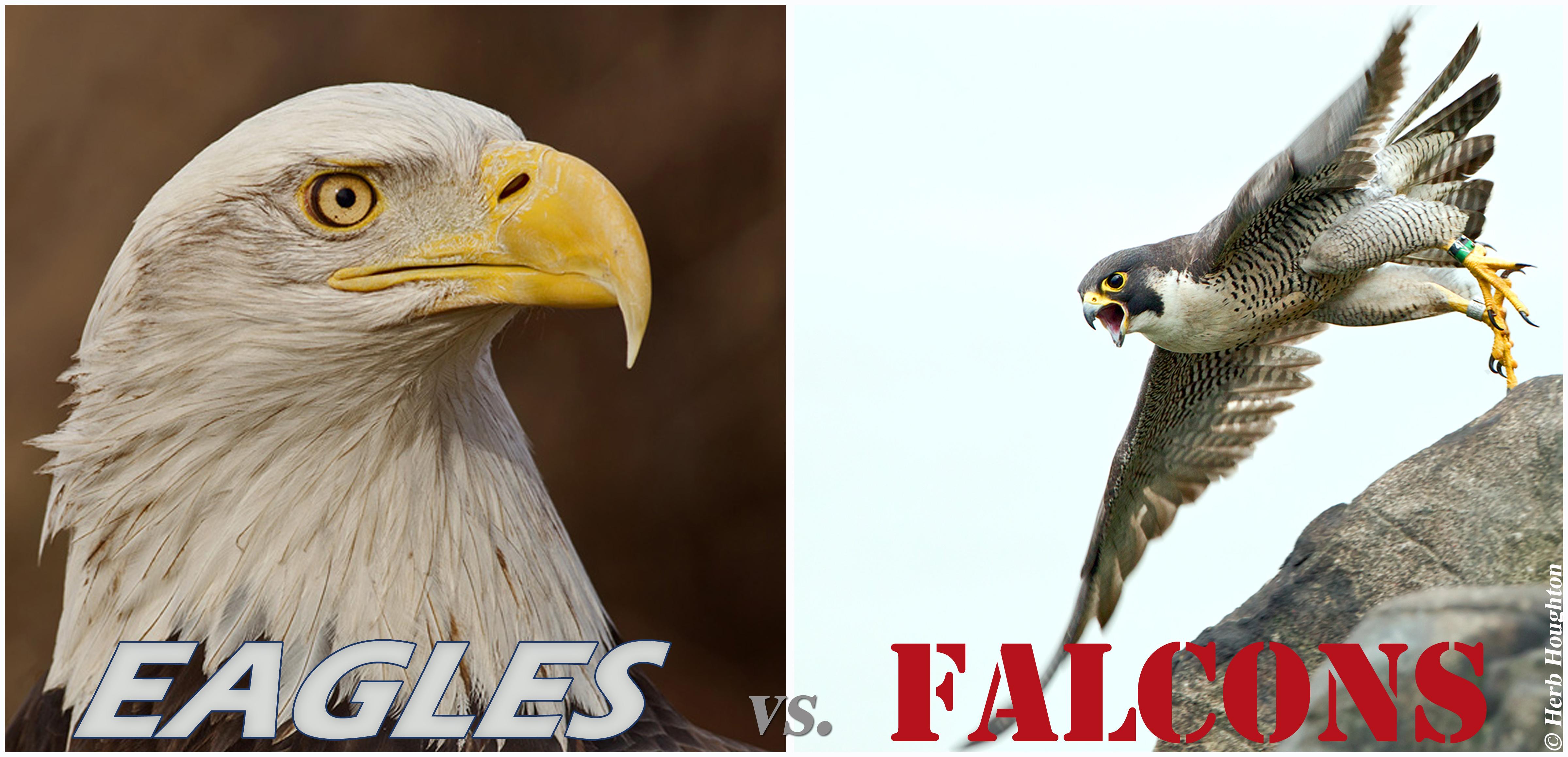 Birds of the Bible  Clean vs Unclean  Lees