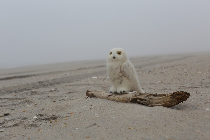A Stuffed Owl hunts a desolate beach.