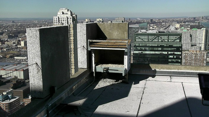 First view from the new camera at the Jersey City peregrine falcon nest.