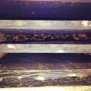 Big brown bats in bat house (c) Stephanie Feigin
