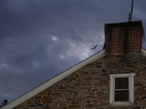 A bat emerges from its summer roost site. © MacKenzie Hall