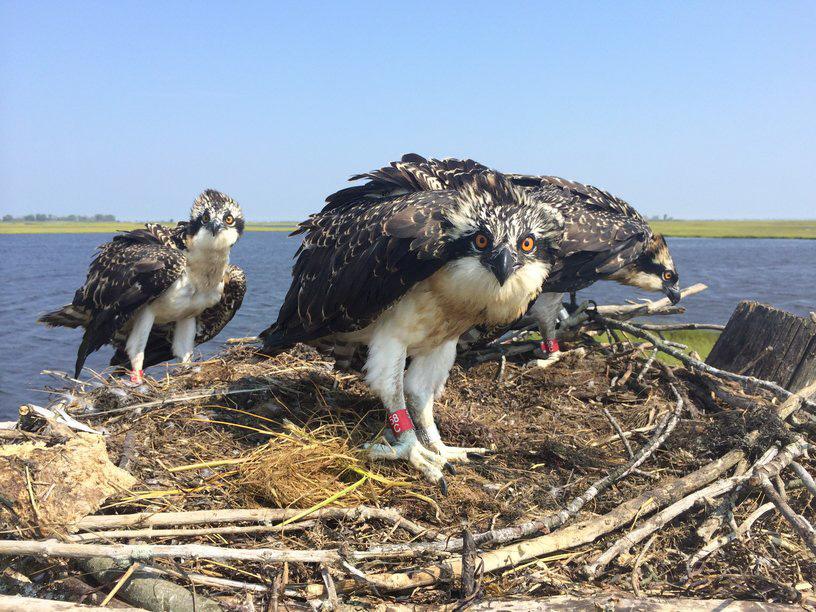 2014 Â« Conserve Wildlife Foundation of New Jersey