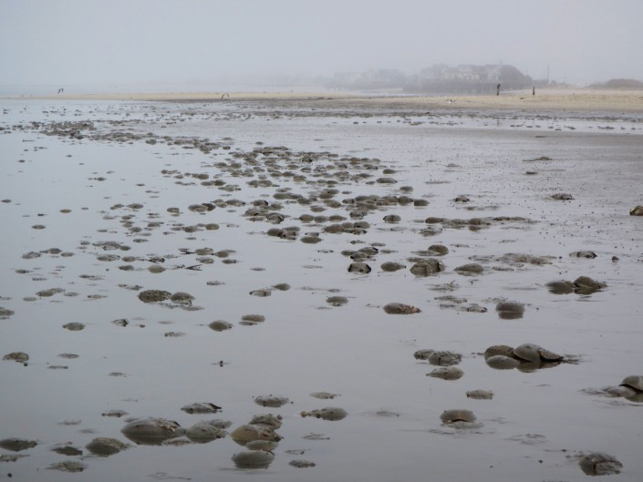 Crabs in Slew