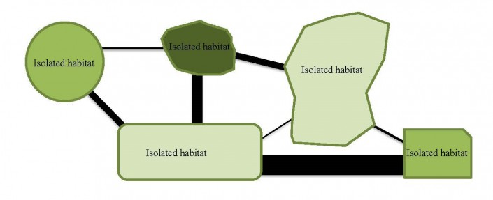 Connectivity is vital for wildlife. Different color habitat patches represent different resources essential for survival. Lines represent possible corridors connecting patches.