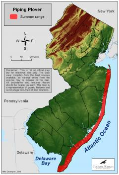 Image of Range of the Piping plover in New Jersey.