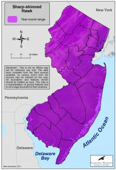 Image of Range of the sharp-shinned hawk in New Jersey.