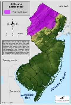 Image of Range of the Jefferson salamander in New Jersey.