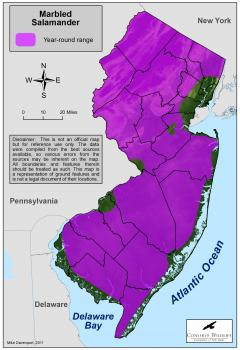 Image of Range of the marbled salamander in New Jersey.