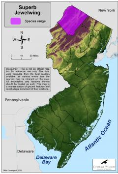 Image of Range of the superb jewelwing in New Jersey.