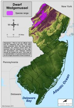 Image of Range of the dwarf wedgemussel in New Jersey.