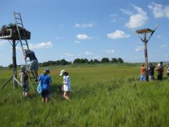 Image of Students examine the contents of an old osprey nest after installing a new one to replace it.
