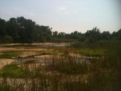 Image of Newly excavated vernal pools in Cape May, NJ