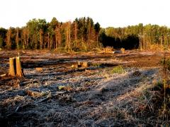 Image of Habitat loss is the greatest threat to New Jersey's wildlife.