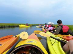 Image of Birding by Kayak tour at Island Beach State Park