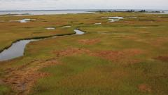Image of The pristine saltmarsh inside Sedge Island WMA.
