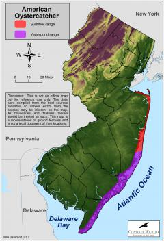 Image of Range of the American oystercatcher in New Jersey.
