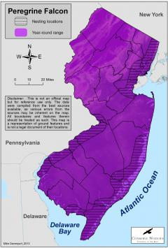 Image of Range of the peregrine falcon in New Jersey.