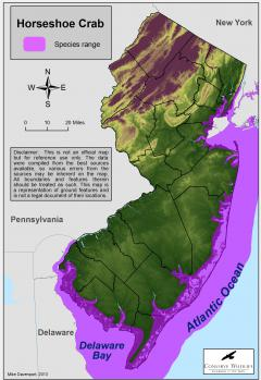 Image of Range of the horseshoe crab in New Jersey.