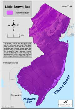 Image of Range of the little brown bat in New Jersey.