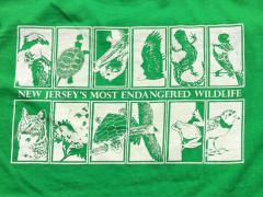 Image of Men's t-shirt in Kelly Green. Printed on super soft 100% cotton using water based ink.