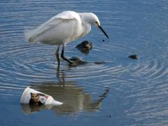 Image of Litter and trash pollute many of our lakes, rivers, estuaries, and oceans.