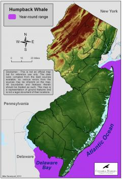 Image of Range of the Humback whale off the coast of New Jersey.