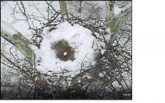 Image of first egg; 2/17/15