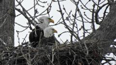 Image of C/94 and mate in CT nest @Cyndi Pratt Didan