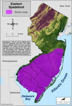 Image of Range of the eastern spadefoot in New Jersey.
