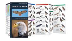 Image of Birds of prey field guide