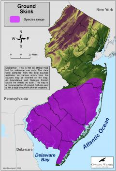Image of Range of the ground skink in New Jersey.