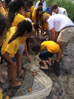 Image of WILDCHILD students investigate the marine life caught in their seine net along the shore of Barnegat Bay.