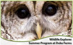 Image of Wildlife Explorer Summer Program at Duke Farms