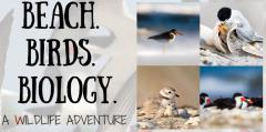 Image of Beach Birds Biology Header