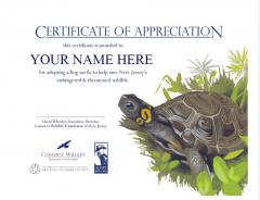 Image of Adopt A Species Certificate with Bog Turtle