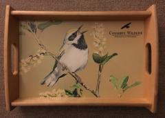 Image of Golden Winged Warbler Small Tray