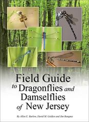 Image of Dragonfly/Damselfly Field Guide