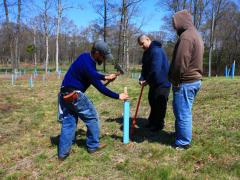 "Image of Ben Wurst drives in a stake to hold a tree tube to protect a ""bare-root"" seedling at a reforestation site in Cape May, New Jersey."