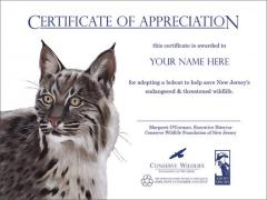 Image of Your Name Here - Adopt a Species Certificate with Bobcat