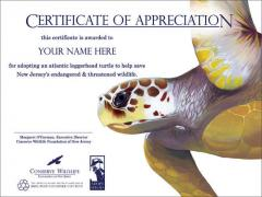 Image of Your Name Here - Adopt a Species Certificate with Atlantic loggerhead turtle