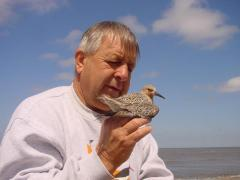 Image of Clive Minton of the International Shorebird Project holds a red knot prior to banding.