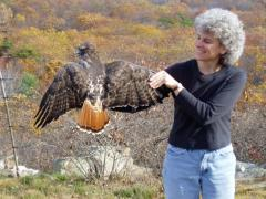 Image of Amy Greene holds a red tailed hawk.