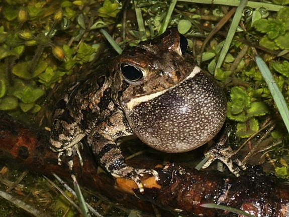 wildlife field guide for new jersey s endangered and threatened rh conservewildlifenj org toad user guide pdf Samsung Galaxy Tab Help Guide
